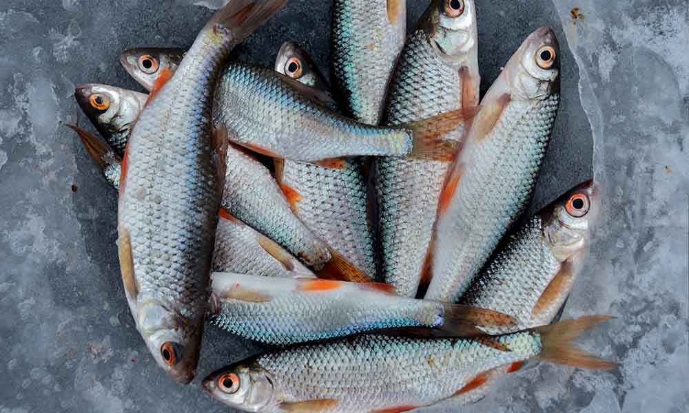 Choosing the right fish at the market